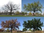 trees_klein4web
